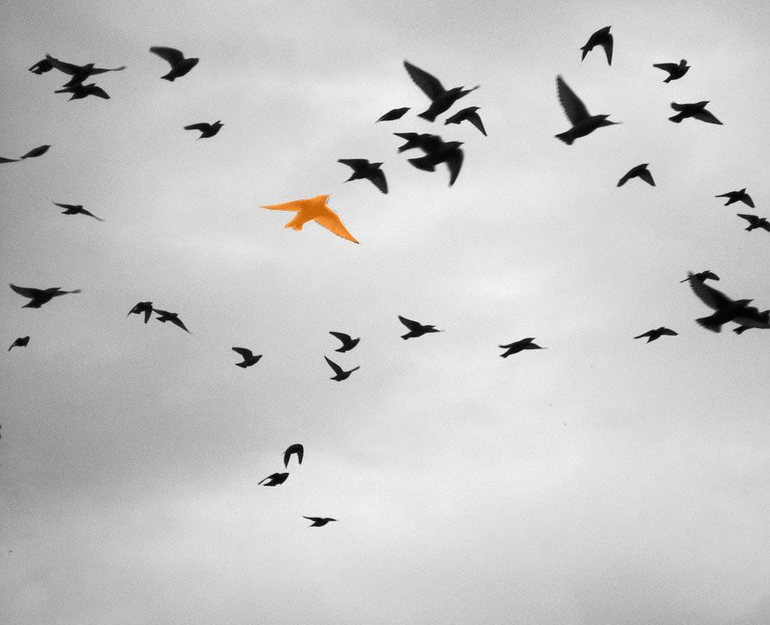 Bernard L'oiseau